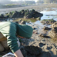 oysters_working_mud